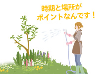 時期と場所がポイントなんです。花木に水を与える人のイラスト。